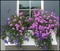 Royal Window Box