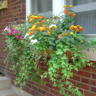 Sara's Copper Window Boxes  in IL