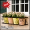 Scroll Window Box Cages