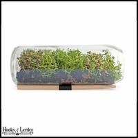 Sedum Terrarium Bottle Kit