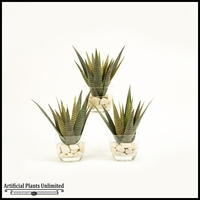 12in. Set Of Three Agave in Glass Dish