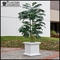 Sienna Square Planters