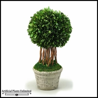 Single Ball Preserved Boxwood Topiary in Round Ceramic Planter, 18 in.
