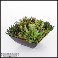 Spotted Aloe Succulent Mix in Black Metal Planter 10.5inLx10.5inWx9inH