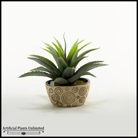 12in. Star Succulent in Oval Ceramic Planter