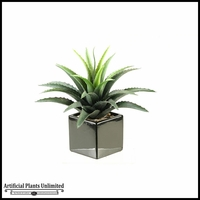 12in. Star Succulent in Square Ceramic Planter