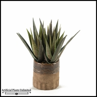 18in. Striped Agave Plant in Round Ceramic Planter