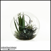 11in. Striped Agave Tillandsia and Desert Yucca in Glass Bowl