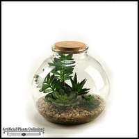 Succulent Aloe and Echeveria in Glass Bottle with Cork Lid, 11 in.