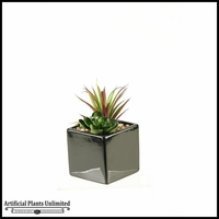 7in. Succulent and Echeveria in Square Black Ceramic Planter