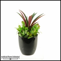 Succulent Arrangement in Black Bowl, 11 in.