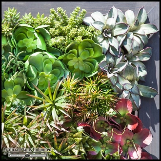 Indoor Artificial Succulent Walls