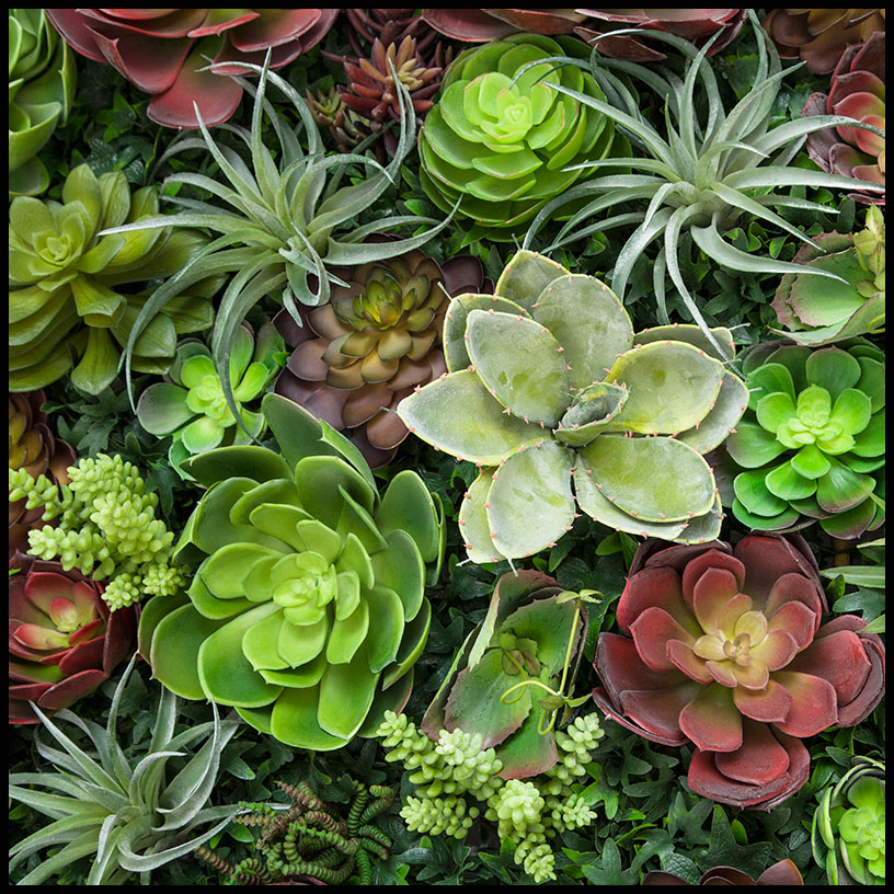 Succulent Living Wall 96inL X 48inH. Click To Enlarge