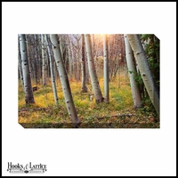 Sun Peeking Through Aspens - Canvas Artwork