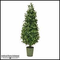 Sweet Bay Cone Topiary In Pot (2 Sizes)