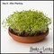 Teracotta Organic Sprouting Kit - Radish