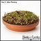 Terracotta Organic Sprouting Kit - Curly Cress