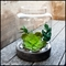 Terrariums, Glass Globes, Hanging Bubble Terrariums