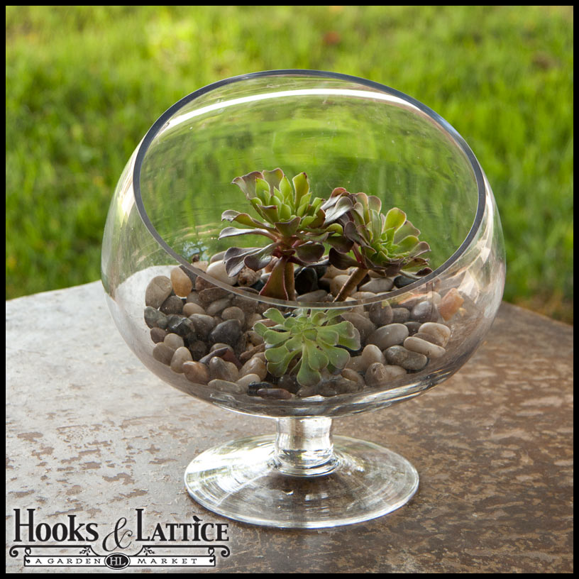 Plant Terrariums For Sale Shop Terrarium Kits For Plants