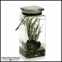 9in. Tillandsia and Echeveria in Glass Jar with Lid