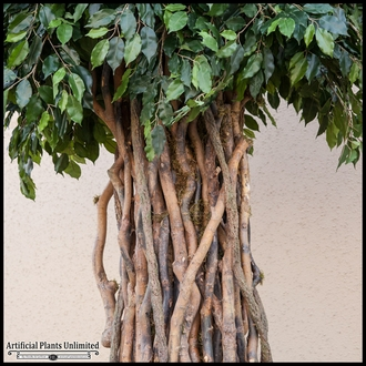 UV Rated Banyan Tree