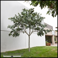 UV Rated Ficus Tree