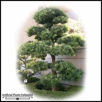 UV Rated Podocarpus Tree