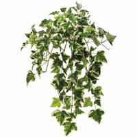 10.5in. Variegated Holland Ivy Hanging Vine, Outdoor Rated
