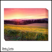 Vineyard Sunrise - Canvas Artwork