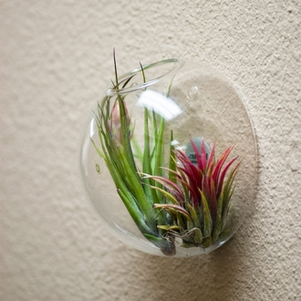 Wall Hung Bubble Terrariums