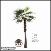 14' Washingtonia Palm