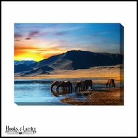 Watering at Sunset Horses - Canvas Artwork