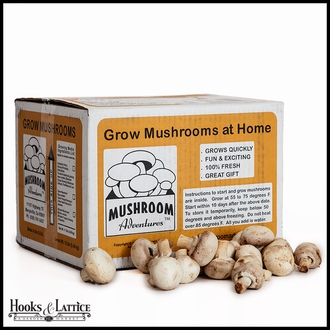 White Button Mushroom Kit