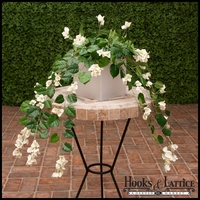 3' White Fire Retardant Bougainvillea Bush