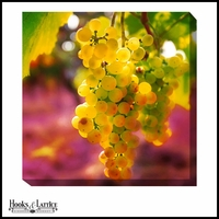 White Wine Grapes - Canvas Artwork