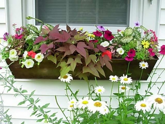 Window Box Contests- Pictures