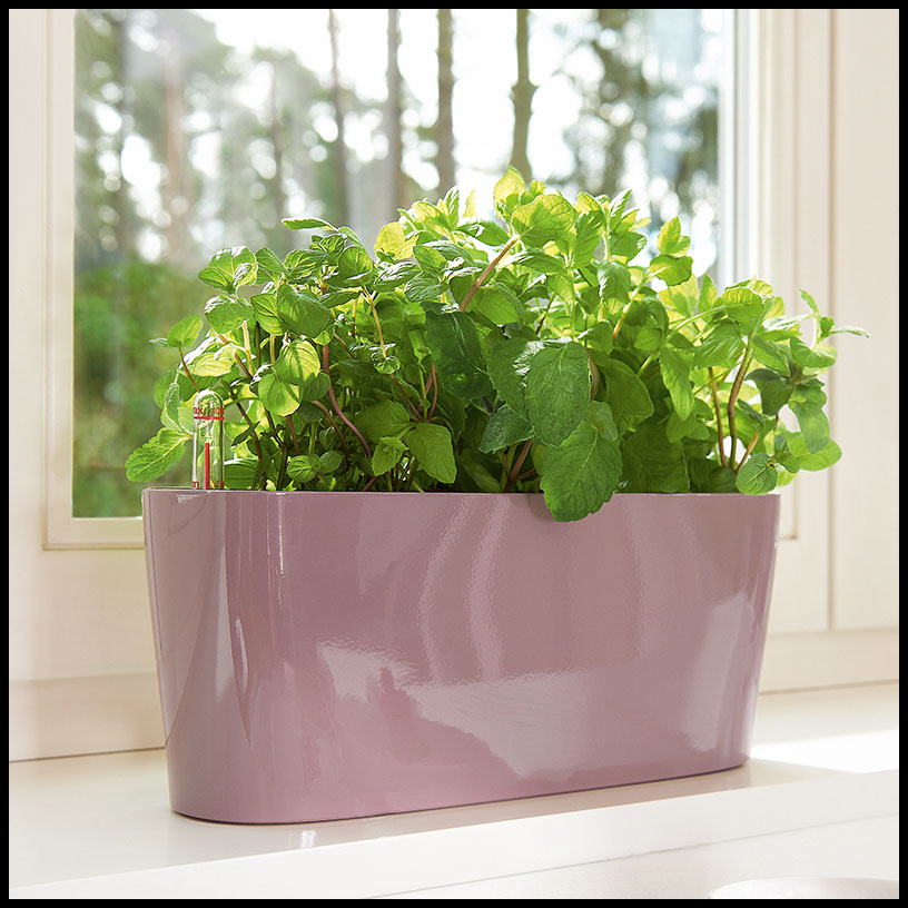 Windowsill Herb Garden Containers 28 Images Windowsill Herb Garden Hometalk Windowsill Herb