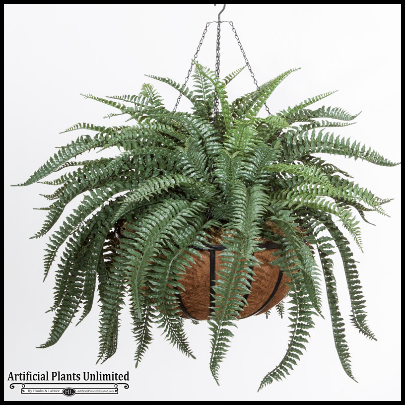 Xl Boston Fern In 22in Hanging Basket Outdoor Rated Click To Enlarge
