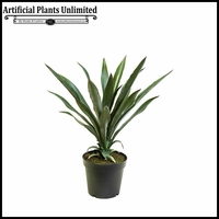 30in. Yucca Plant