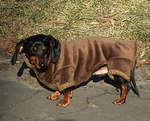 Dachshund Bronze Windblock Fleece Bodysuit