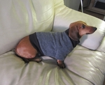 Dachshund Heathered Smoky Grey Tweed Fleece Sweater
