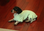 Dachshund Soft Mint Jammies