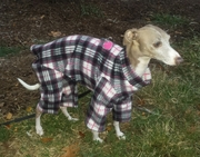 Italian Greyhound Black/Cream/Red Plaid Indoor/Outdoor Bodysuit