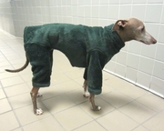 Italian Greyhound Cypress Windblock Fleece Bodysuit