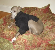 Italian Greyhound Dark Charcoal Heavy Fleece Sweater