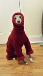 Italian Greyhound Extra Heavy Garnet Hooded Bodysuit