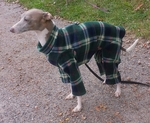 Italian Greyhound London Plaid Indoor/Outdoor Bodysuit