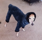 Italian Greyhound Twilight Windblock Hooded Bodysuit