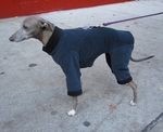 Italian Greyhound Twilight Windblock Fleece Bodysuit