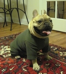 Pug, Boston Terrier and French Bulldog Forest Fleece Bodysuit